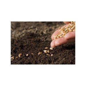 Sjemenja i sadnice